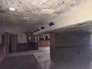 mold due to burst pipe in Columbus, Ohio